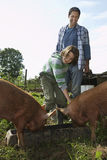 Father And Son Feeding Pigs In Sty Stock Photos