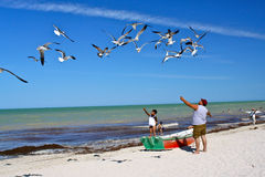 Father and son feeding seagulls on mexican beach Royalty Free Stock Photo