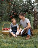 Boy wicker son red green grass trees apple little help garden two basket two work glove apron father together family smile. Father and son are in the garden and royalty free stock photography