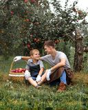 Boy wicker son red green grass trees apple little help garden two basket two work glove apron father together family smile. Father and son are in the garden and stock photos