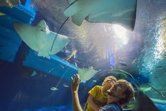 Father and son looking at fish in a tunnel aquarium stock image