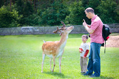Father and son in a park with deer Stock Photo
