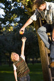 Father and son (7-9) picking apples, father on ladder giving apple to son Stock Photos