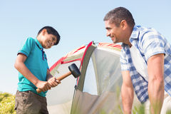 Father and son pitching their tent Stock Image
