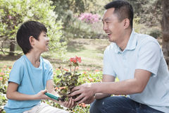 Father and son planting flowers. Royalty Free Stock Photography