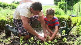 Father And Son Planting Seedling In Ground On Allotment Stock Footage
