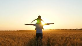 Father and son play in a wheat field at sunset, portraying a bird or a plane. Happy family. stock video