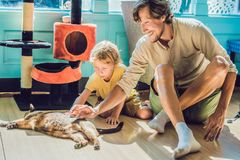 Father and son playing with a cat.  Stock Photo