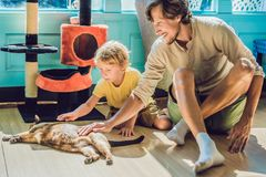 Father and son playing with a cat.  Royalty Free Stock Image
