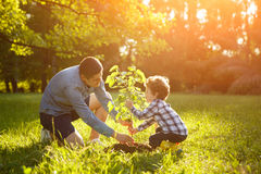 Father and son setting plant Royalty Free Stock Image