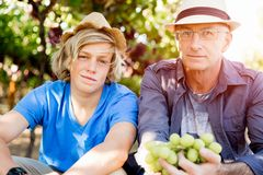 Father and son in vineyard stock photos