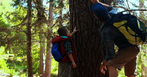 Father and son touching tree trunk in the park. On a sunny day stock footage