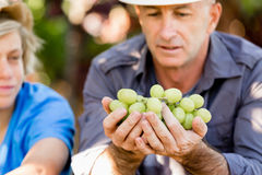 Father and son in vineyard Royalty Free Stock Image