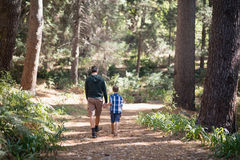 Father and son walking in forest on sunny day. Rear view of father and son walking in forest on sunny day Royalty Free Stock Photo
