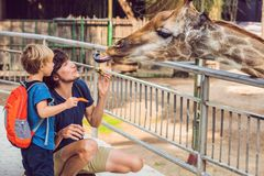 Father and son watching and feeding giraffe in zoo. Happy kid ha royalty free stock photography