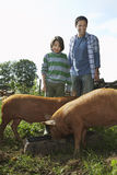 Father And Son Watching Pigs Eat In Sty Royalty Free Stock Photo