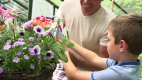 Father And Son Watering Plants In Greenhouse stock footage