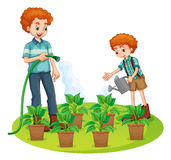 Father and son watering the plants. Illustration Royalty Free Stock Photography