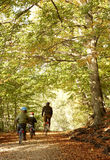 Father and sons. Cycling in autumn woods stock photo