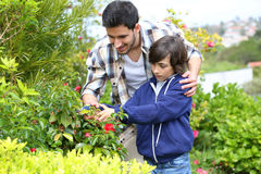 Father teaching his son how to cut plants Stock Photo