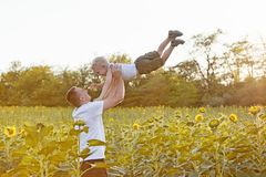 Father throws up his little son on a green sunflowers field against the sky royalty free stock photos