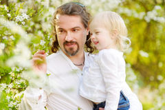 Father and toddler girl having fun at spring. Yound father and his adorable toddler daughter having fun in blossoming cherry garden on beautiful spring day Stock Photography