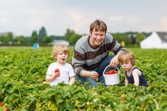 Father and two little boys on organic strawberry farm Stock Image