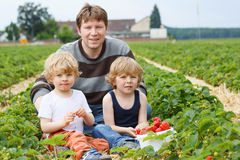 Father and two little boys on organic strawberry farm Stock Images