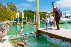 Father and two little kid boys feeding fishes and pelicans Royalty Free Stock Images