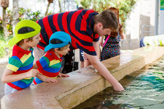 Father and two little kid boys feeding rays in a recreation area Royalty Free Stock Photo