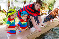 Father and two little kid boys feeding rays in a recreation area Stock Images