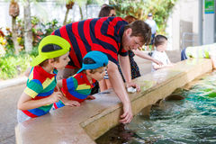 Father and two little kid boys feeding rays in a recreation area Royalty Free Stock Photography
