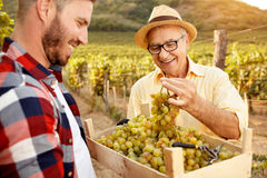 Father vintner showing grapes to son. In vineyard Royalty Free Stock Image