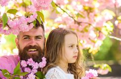 Fatherhood concept. Girl with dad near sakura flowers on spring day. Child and man with tender pink flowers in beard Stock Image