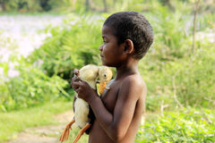 Fatherly feeling- embracing the duckling. The child is standing with a duckling in his lap Stock Photos