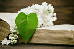 Fathers Day card: White lilac flower and heart shaped leaf Royalty Free Stock Photography