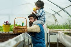 Fathers day. happy fathers day. fathers day holiday. father and son in greenhouse at fathers day. hello. royalty free stock image