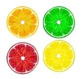 Fatia de citrinas frescas isoladas no fundo branco Limão, cal, toranja e laranja Ilustração do vetor Fotos de Stock Royalty Free