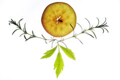Fatia de maçã com as folhas dos alecrins e do aipo Fotografia de Stock