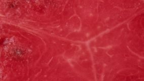 Fatia de melancia vermelha vídeos de arquivo