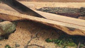 A fatia do rasgo do homem cortou o tronco de árvore enorme com serra de cadeia filme