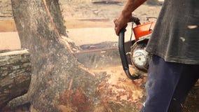A fatia do rasgo do homem cortou o tronco de árvore enorme com serra de cadeia video estoque