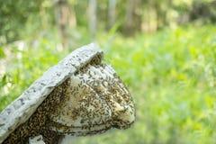Fatia selvagem natural do favo de mel isolada no fundo borrado foto de stock royalty free