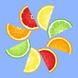 Fatias das citrinas no azul. ilustração royalty free