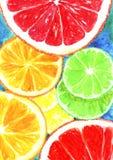 Fatias de fundo do teste padrão da aquarela do limão, da laranja e da toranja ilustração stock