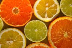 Fatias de laranjas, de limões, de cais e de mandarino Foto de Stock