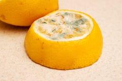 Fatias de limão mofado em um fundo claro Alimentos estragados que são perigosos para o consumption_ imagem de stock