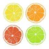 Fatias do citrino Imagens de Stock Royalty Free
