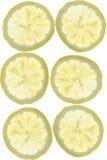 Fatias do limão Fotografia de Stock