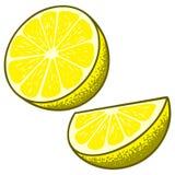 Fatias do limão ilustração royalty free